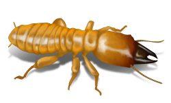 dampwood termite in grass